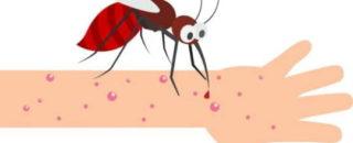 Про насекомых