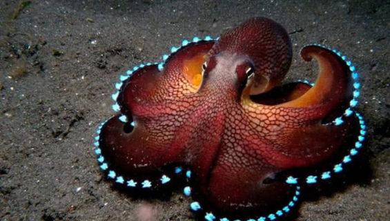 Загадки про осьминога