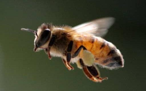 Загадки про пчёл