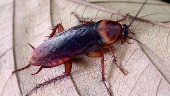 Загадки про таракана
