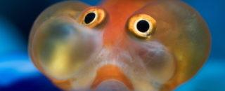Загадки о рыбах