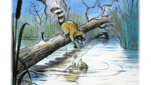 Слушать аудиосказку Крошка Енот и тот, кто сидит в пруду