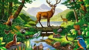Слушать аудиосказку Рассказы о животных Житкова