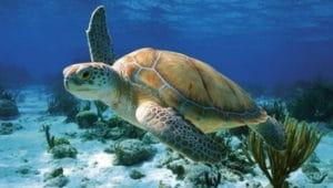 Загадки про черепаху