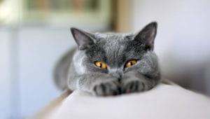 Загадки про кота икошку
