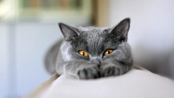 Загадки про кота и кошку