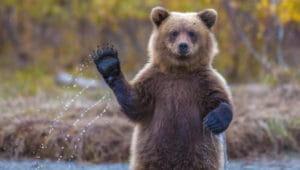 Загадки про медведя