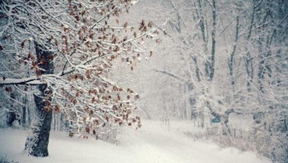 Сказки и загадки про зиму читать и слушать онлайн