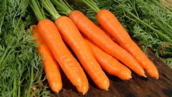 Загадки про морковь для детей и школьников