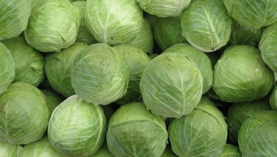 Загадки про капусту для детей и школьников