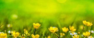 Загадки про цветы для детей и школьников с ответами