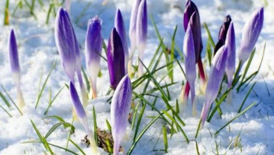 Загадки про весну