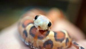 Загадки про змею
