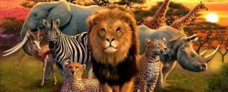 Загадки про льва и других диких животных
