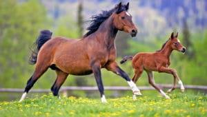 Загадки про лошадь