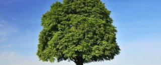 Загадки про дерево