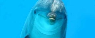 Загадки про дельфина