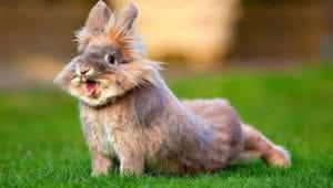 Загадки про кролика
